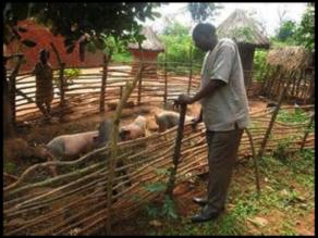 Rwanda Piggery